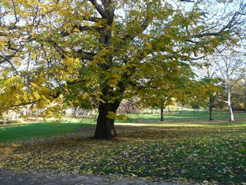 Hyde Park est un parc très arboré